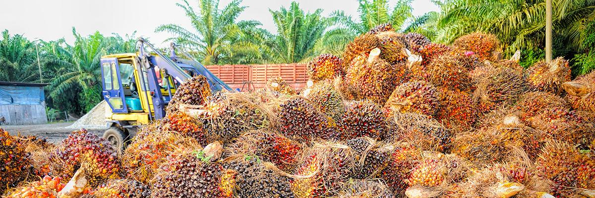 インドネシアにおけるバイオ燃料使用の義務化
